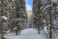 byers peak, byers peak wilderness, st. louis creek, fraser, winter park, grand county, snow, pine, fresh snow, hiking, snowshoeing, trails