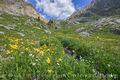colorado wildflowers, vail, summit county, upper piney lake, upper piney lake trail, upper piney trail, aster, alpine, sunflower, hiking, wildflowers, summer, july