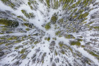 Aerial of a Snowy Trail 1