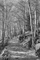 Aspen Trail in Black and White 1