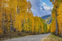 Autumn Aspen Road 1