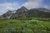 Bluebells and the Maroon Bells 1