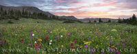 Colorado Wildflower Panorama 1
