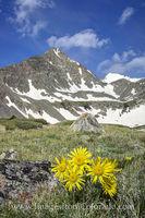 Crystal Peak and Wildflowers near Breckenridge 2