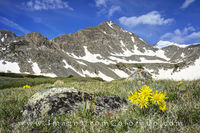 Crystal Peak and Wildflowers near Breckenridge 3