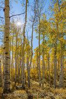 Grand Mesa Autumn Aspen Sunburst 1