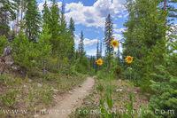 Ice Hill Trail - Winter Park,  Colorado 1