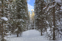 Journey through the Snowy Forest 2