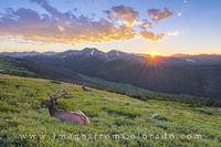 RMNP - Elk at Sunset 1