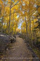 Rocky Mountain National Park Aspen Path 1