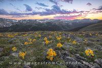 Sunflower Sunset in Rocky Mountain National Park 2