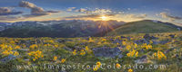 Rocky Mountain Wildflower Panorama 1
