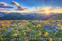 Sunflower Sunset in Rocky Mountain National Park 1