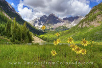 Sunflowers at the Maroon Bells 1