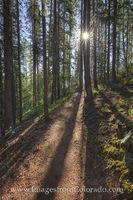 Winter Park Trails - Ice Hill Sunshine 1