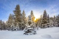 Winter Sunburst 1228-2