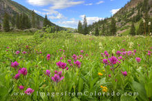 colorado wildflowers, booth lake, colorado summer, prints, eagles nest wilderness, vail colorado, vail