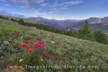 colorado wildflowers, berthoud pass, wildflower images, berthoud pass images, CDT images, red mountain, grand county, grand county images, paintbrush, colorado morning, colorado summer