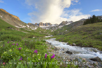 colorado wildflowers, american basin, lake city, san juan mountains, san juans, snowmelt, wildflowers, summer, colorado summer, hiking, colorado hikes.