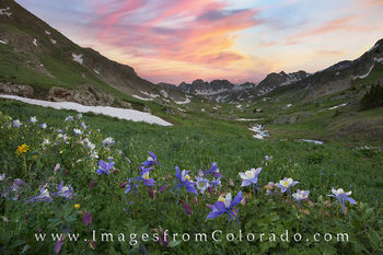 lake city, colorado wildflowers, colorado columbine, columbine, american basin, 14ers