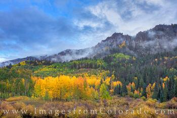 Aspen Gold near Owl Creek Pass 101-1