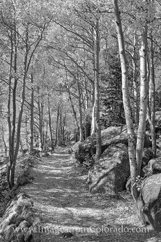 colorado black and white images, colorado images, black and white, rocky mountain national park, rocky mountains, hiking colorado, colorado trails, autumn, aspen leaves, aspen trees