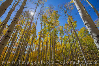 aspen, grand mesa, old grand mesa road, sunlight, fall, autumn, blue sky, beauty