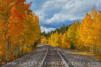 Aspen along Traintracks in Autumn 929-1