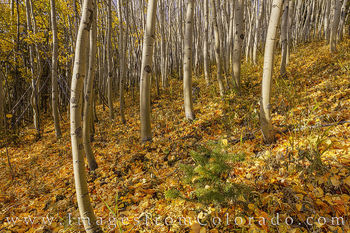 aspen, fraser, fraser valley, winter park, autumn, fall, colorado prints, fall prints, autumn prints, october