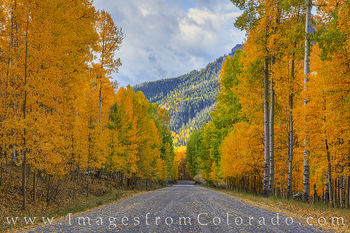 aspen, country road, fall, october, cimarron, san juans, autumn, gold, orange