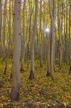aspen, sunlight, sunburst, october, fall, autumn, san juans, forest, morning