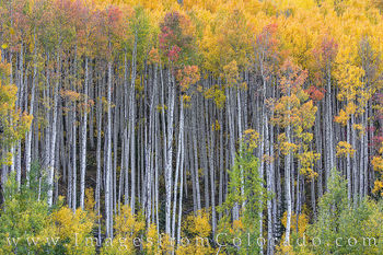Autumn in the Maroon Bells Wilderness, Colorado 103-1