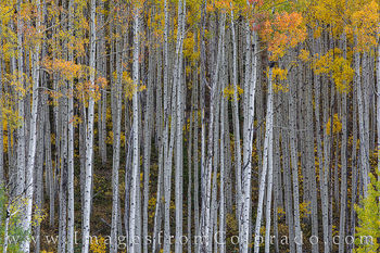 Autumn in the Maroon Bells Wilderness, Colorado 103-3
