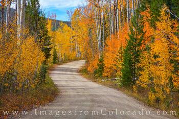 Autumn's Curves 930-1