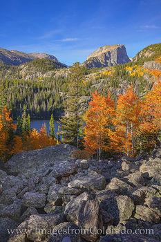 fall colors, autumn, rocky mountain national park, bear lake, prints, colorado prints, morning, orange, gold, aspen