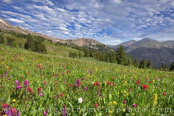 wildflowers, paintbrush, butler gulch, highway 40, winter park, berthoud pass, alpine flowers, summer, afternoon