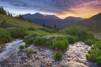 wildflowers, bulter gulch, stream, sunrise, hike, berthoud pass, clear county, solitude, parrys primrose