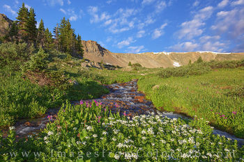 butler gulch, berthoud pass, clear creek county, stream, parrys primrose, morning, quiet, hiking