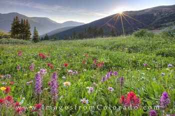 Colorado Wildflower images, Colorado Wildflower photos, Colorado wildflower pictures, colorado wildflowers, butler gulch wildflowers, butler gulch images, butler gulch pictures, colorado images, texas