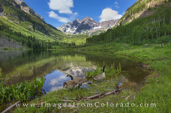 Maroon Bells and Canada Geese 2