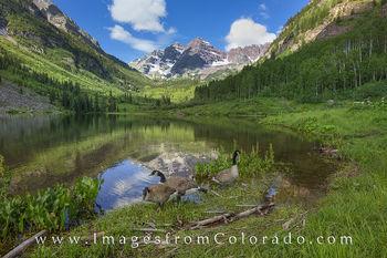 maroon bells, maroon bells wilderness, maroon lake, canada geese, aspen, 14ers