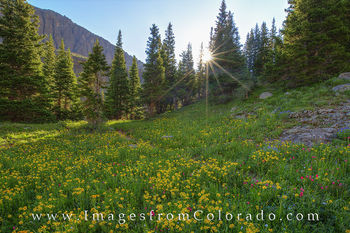 colorado wildflower photos, colorado wildflowers prints, blue lakes trail, ridgway, ouray, colorado trails, hiking colorado, colorado sunrise
