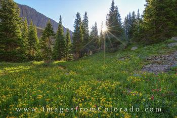 colorado wildflower photos, colorado wildflowers prints, blue lakes trail, ridgway, ouray, colorado trails, hiking colorado, colorado sunrise