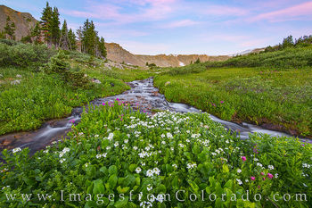 bulter gulch, berthoud pass, clear creek county, wildflowers, morning, summer, morning