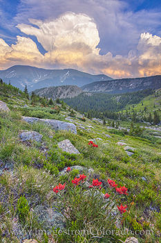 Berthoud Pass, winter park, Colorado wildflowers, storm clouds, second creek, summer, Colorado landscapes, winter park prints, wildflower prints