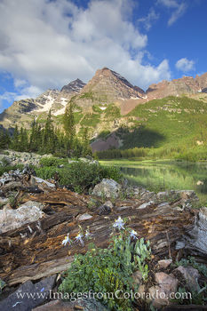crater lake, maroon bells, columbine, colorado wildflowers, colorado summer, aspen in summer, aspen