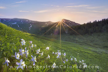 colorado wildflowers, crested butte, west maroon pass, columbine, aspen, summer, landscapes, hiking, hiking trails