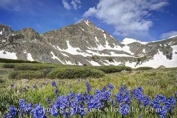 Crystal Peak and Wildflowers near Breckenridge 1