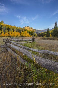aspen, CR 7, fall Dallas Divide, Sneffels, fence, autumn