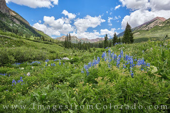 colorado wildflowers, wildflowers, lupine, crested butte, elk mountains, gothic road, blue, summer, morning